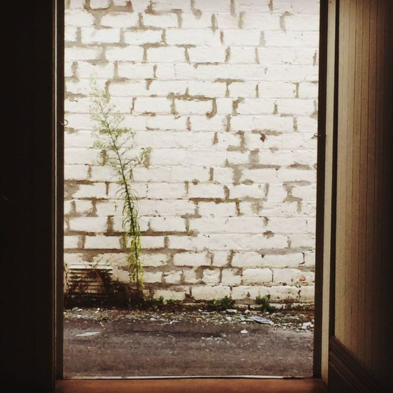 I love that nature is determined... Landscape Brick Wall Whitewashed Offcenter Doorway Doorframe Nature Trying Never Give Up Survivor