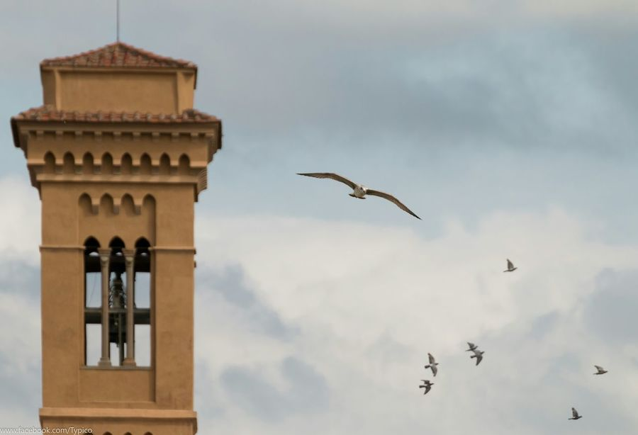 Quality Time Sky Seagull Florence Birdwatching Deceptively Simple Capture The Moment