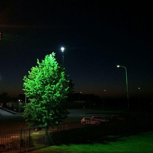 Tree Green Night Illuminated Tree Street Light No People Outdoors Sky