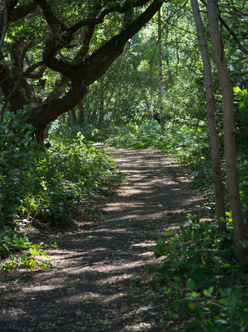 Summer Woods Day Direction Footpath Forest Green Color Growth Land Nature No People Outdoors Plant Shadow Summer Woods Sunlight The Way Forward Trail Tranquil Scene Tranquility Tree Wimbledon Common WoodLand
