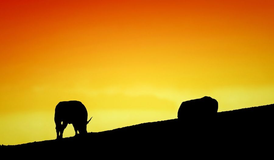 Silhouette Of Animals At Sunset