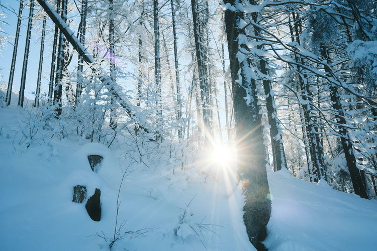 Sunlight streaming through trees in snow covered forest