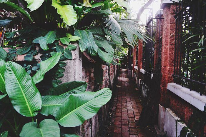 Secret Garden Travelling Bangkok Jim Thompson