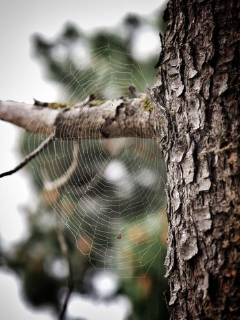 Details of nature Focus On Foreground Tree Spider Web Close-up Plant Tree Trunk Trunk Animal Themes Pattern Nature Outdoors Day No People