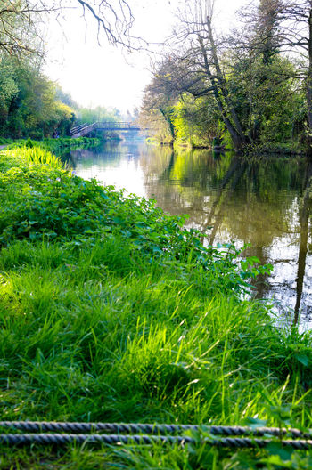 A sunny evening on the banks of The River Kennet in Reading, Berkshire, UK. Beauty In Nature Berkshire Grass Grass Green Color Growth Nature No People Outdoors Reading Reflection River River Kennet Riverbank Riverside Scenics Tranquil Scene Tranquility Tree Vegetation Water Waterway