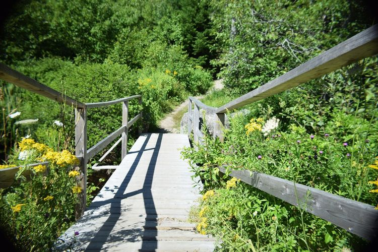 Bridge Bridge - Man Made Structure Connection Footbridge Footpath Green Color Growth Hand Rail Leading Lines Lush Foliage Narrow Nature Plant Railing Staircase Steps The Way Forward Tree