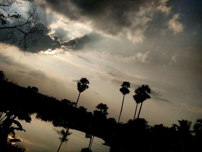 Surreal. . . Sunset Cloud - Sky Nature Tree Sky Beauty In Nature Dramatic Sky No People Outdoors Sunbeam Landscape Surrealism From A Train Window Light And Reflection Palm Trees Reflection Shadows & Lights Shadows And Silhouettes
