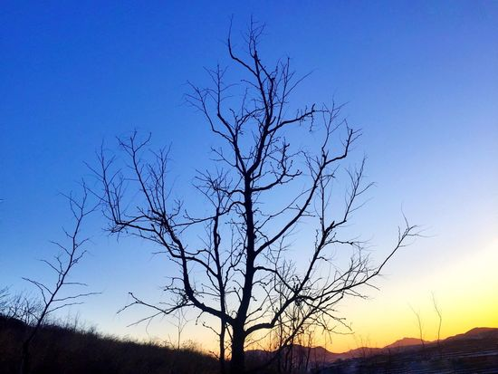 The tree / Qianxi, Hebei Bare Tree Blue Silhouette Tree No People Tranquility Clear Sky Nature Tranquil Scene Outdoors Sky Scenics Beauty In Nature Idyllic Non-urban Scene Branch Low Angle View Day Cold Temperature Mobilephotography BEIJING北京CHINA中国BEAUTY Beauty In Nature Hometown Iphone6 IPhoneography