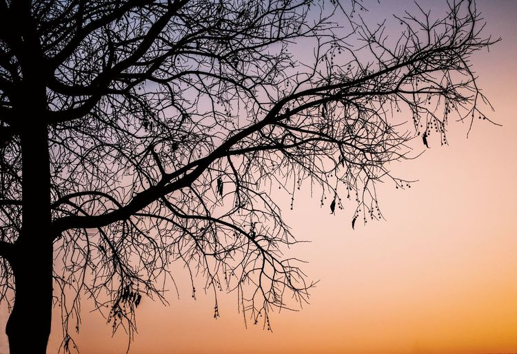 Low angle view of bare tree against sky during sunset