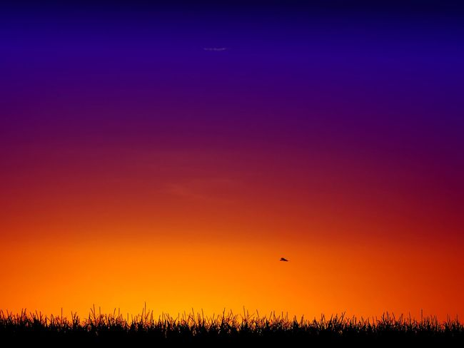 Beauty In Nature Blue Dramatic Sky Field Flower Growth Idyllic Landscape Majestic Nature Non-urban Scene Orange Color Outdoors Plant Romantic Sky Scenics Silhouette Sky Sun Sunset Tranquil Scene Tranquility Uncultivated Vibrant Color Yellow