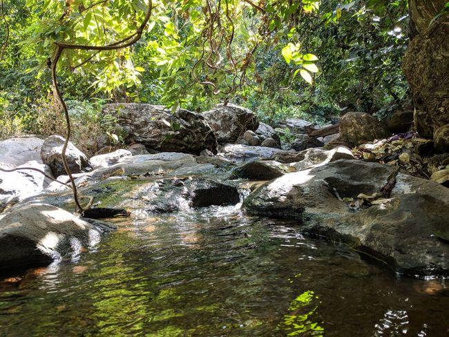 still water inside forest Nature Sunlight Still Water Reflection