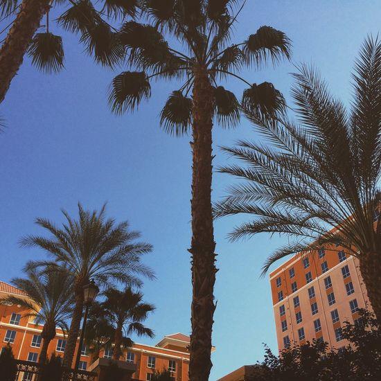 Palm Trees little Beach Enjoying The Sun Living Life and Running Free