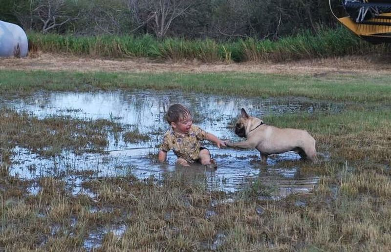Animal Themes Outdoors Dog Frenchbulldog Playtime Highfive Cute Pets Farm Saskatchewan Pets
