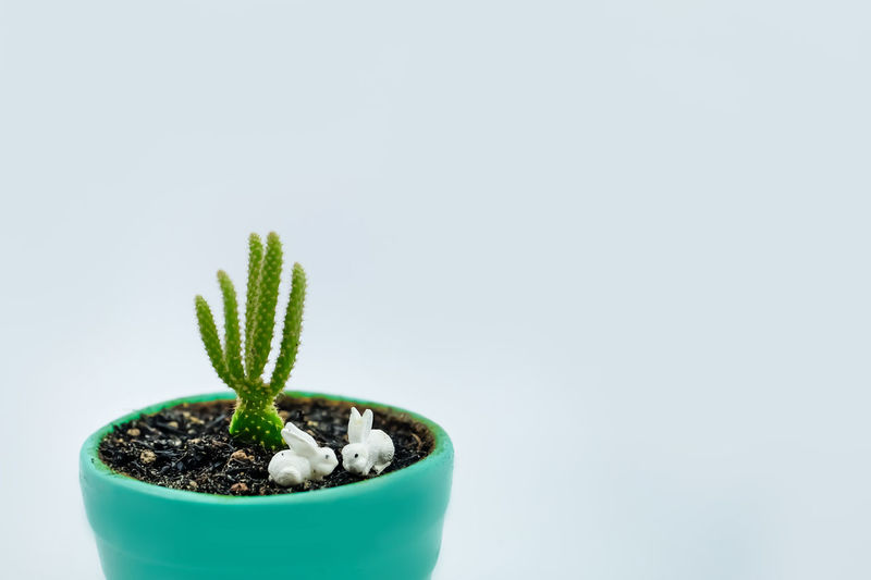 Close-up of small potted plant against white background