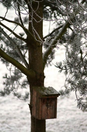 Tree Nature No People Winter Snow Outdoors Day Cold Temperature Bird House Cold Sky Beauty In Nature Needle - Plant Part