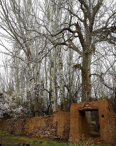 پاييز كه مي شود دلم گرم مي شود انگار تمام جهان عاشقانه است بس نيست اين همه شعر درخت و باد عالم براي تو آشوب مي شود محمدجواد_عدالتخواه ابیانه پاییز درخت باد شعر عکس_نوشته عکس Photo Fall Autumn Abyaneh Tree Poet