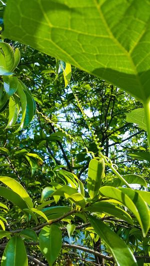 Green Color Leaf Nature Growth Tree Low Angle View Beauty In Nature Full Frame No People Backgrounds Outdoors Close-up Scenics Day Lush - Description Freshness Beauty In Nature Nature Growth Grass Green Color Small Flower SmallFlowers Flowermagic Flowers, Nature And Beauty