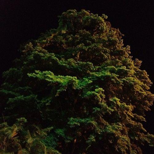 Árbol de noche