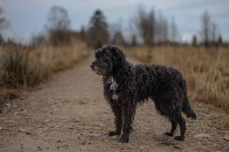 Dog Pets Domestic Animals One Animal Mammal Animal Themes Focus On Foreground Day Field Sand Outdoors No People Full Length Nature Sky