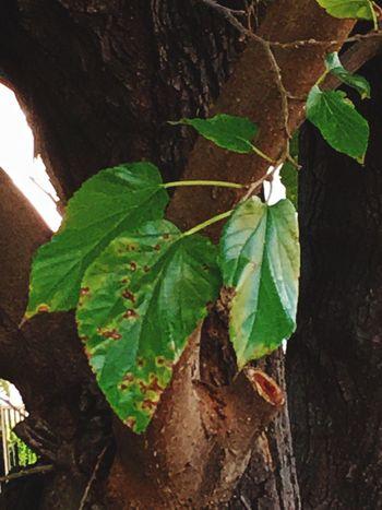 Tree Trunk Close-up Leaf Vein Tree Botany Nature Photography