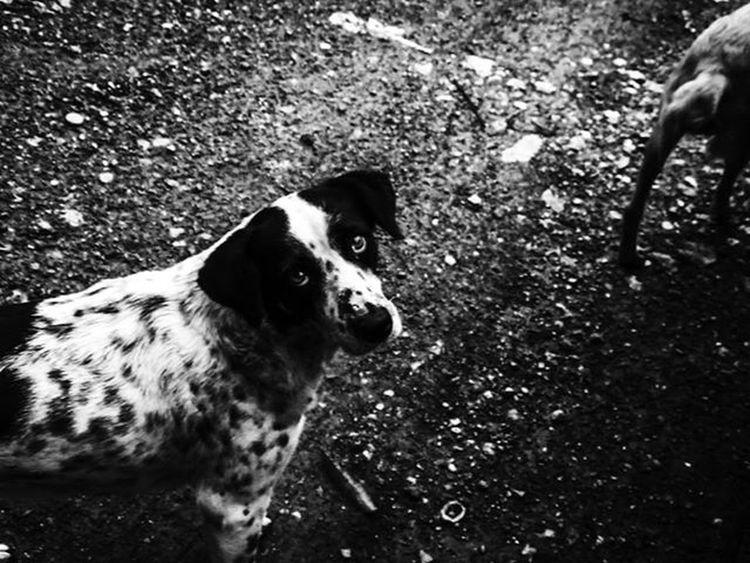 Blackandwhitephotography SocialDocumentary Dog