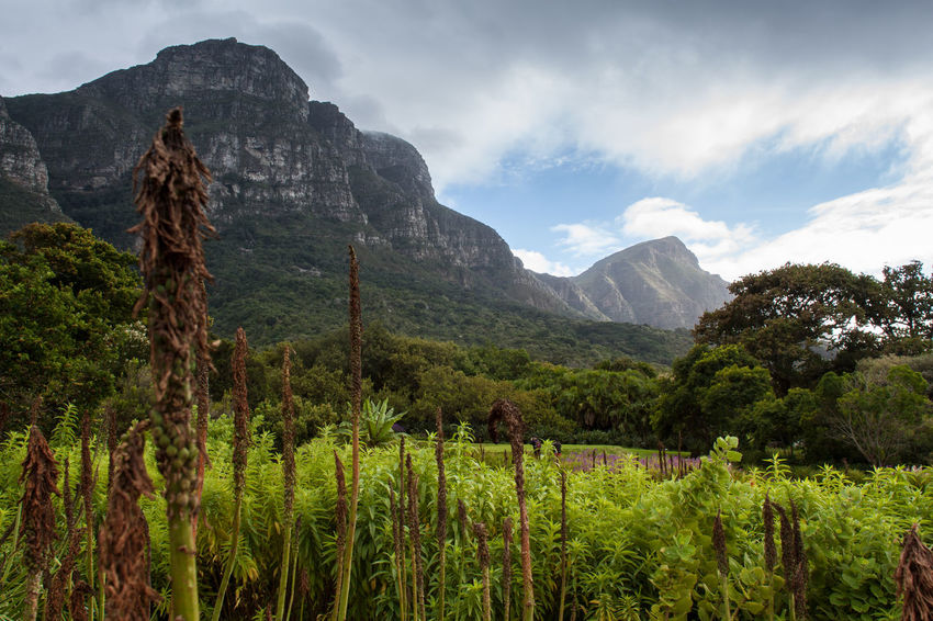 Africa Botanical Botanical Gardens Day Green Kirstenbosch Landscape Lush Foliage Mountain Nature Non-urban Scene Physical Geography Scenics South Africa Tranquil Scene Tranquility