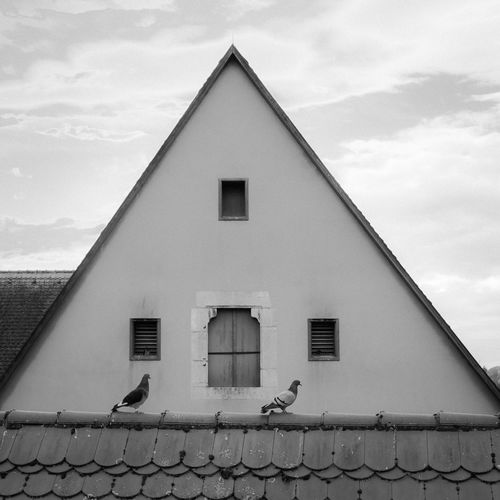 two pigeons on a roof in foreground agains triangle facade and sky - Rothenburg ob der Tauber, Germany Nikon Animal Themes Animals In The Wild Architectural Column Architecture Bird Birds Black And White Blackandwhite Blackandwhite Photography Building Exterior Built Structure Cloud - Sky Day Low Angle View No People Outdoors Perching Pidgeon  Pidgeonlife Roof Rothenburg Ob Der Tauber Sky Tiled Roof  Togetherness EyeEm Ready   The Graphic City Colour Your Horizn Visual Creativity