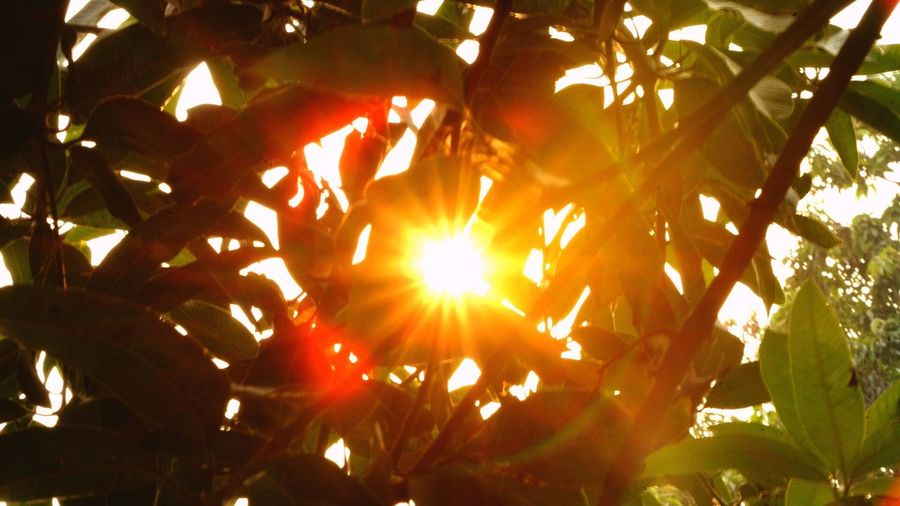 Sun Power Sun