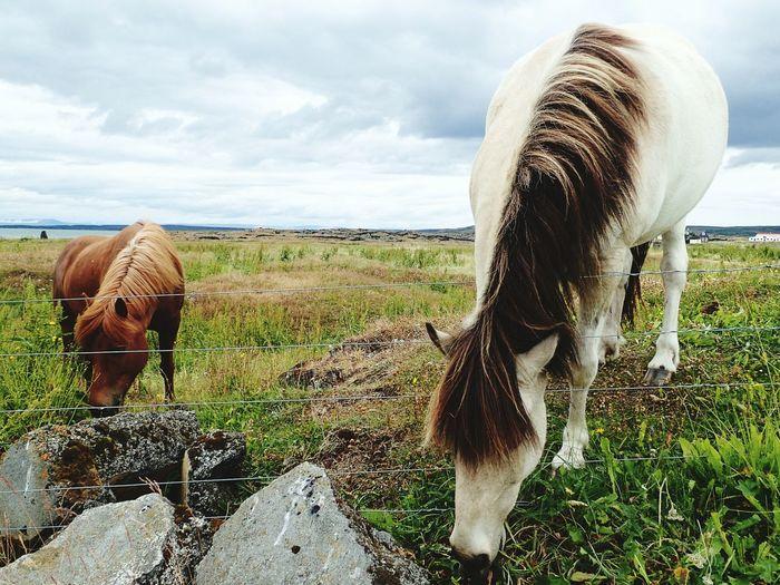 EyeEm Selects Cloud - Sky No People Animal Themes Sky Nature Shotzdelight Icelandic Horse Iceland Wanderlust Moments Timeless New On Eyeem Tranquility