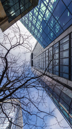 Architecture Bare Tree Branches Built Structure Cityscapes Clouds Day Facades Frankfurt Am Main Glass - Material Lookingup No People Outdoors Perspective Photography Sky Skyscraper Tree Tree