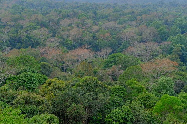 Fertile forest.