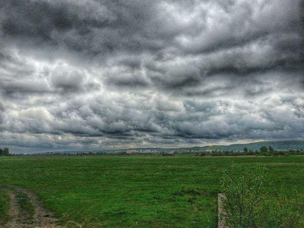 Relaxing Las Cloud Gdynia Nadmorskie łąki