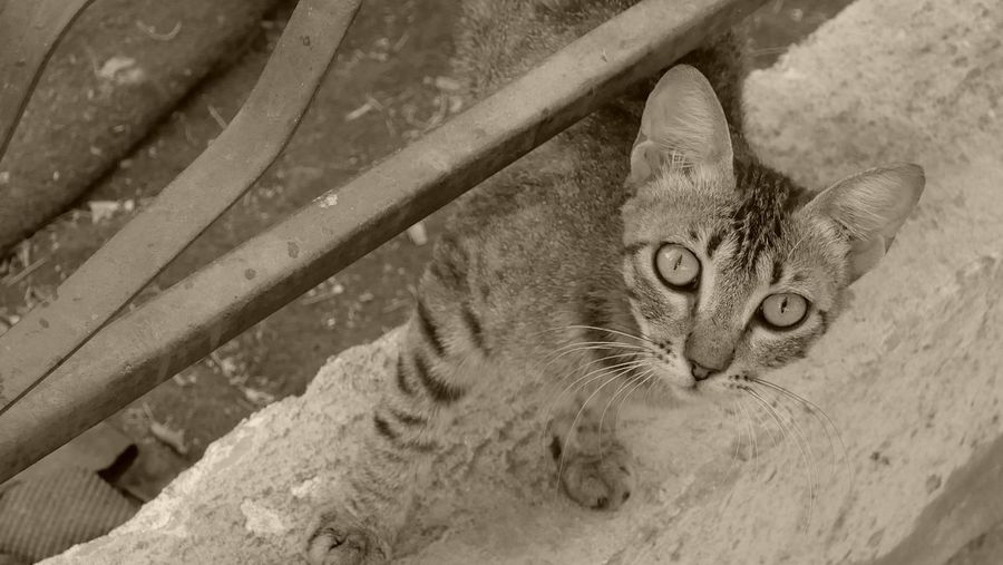 Street Outdoors Cat One Animal Animal Feline Animal Themes Domestic Cat Mammal Pets Domestic Animals No People Close-up Day Animal Body Part Looking At Camera
