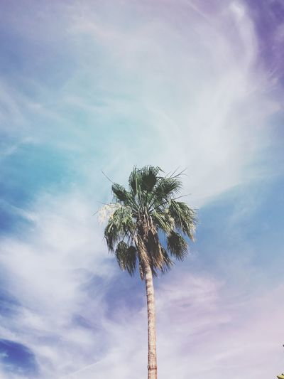Sky Low Angle View Palm Tree Tree Cloud - Sky Outdoors Day Blue Nature No People Beauty In Nature Tree Trunk Summertime Summer Warm Palm Palm Tree Palm Trees Tropical Tropical Climate Only One Tropical Plants Tropical Paradise Sky And Clouds Sky_collection