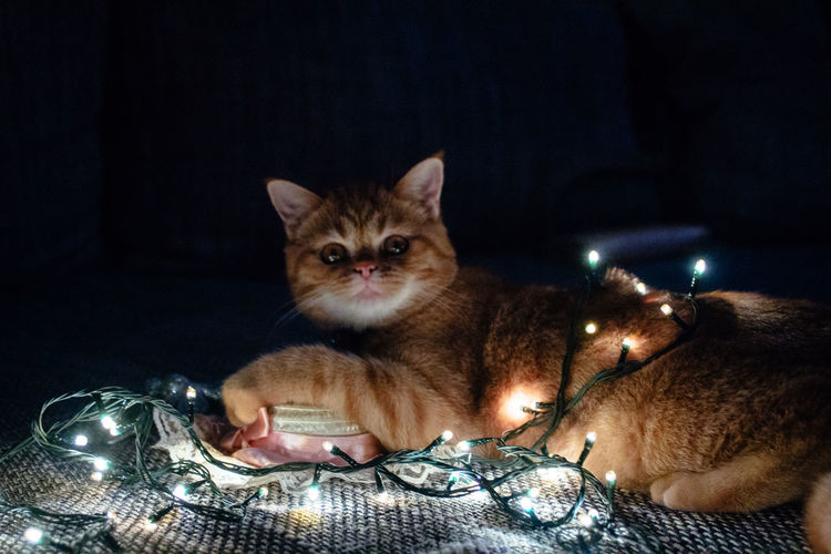 Close-up portrait of cat by illuminated light