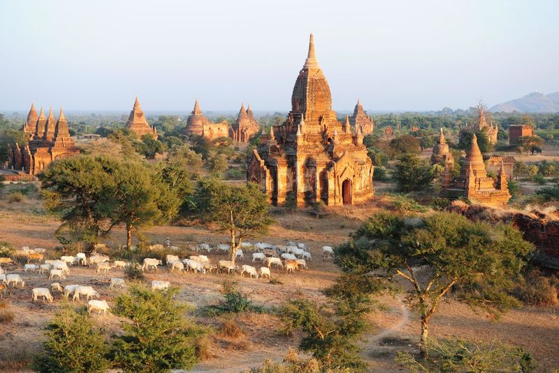 Holy Temple Sheep Temple Spiritual Free Rural Sunset Warm Bagan Golden Hour 43 Golden Moments Original Experiences Myanmar