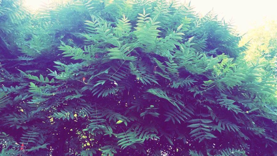 Naturee 🌿✨ First Eyeem Photo