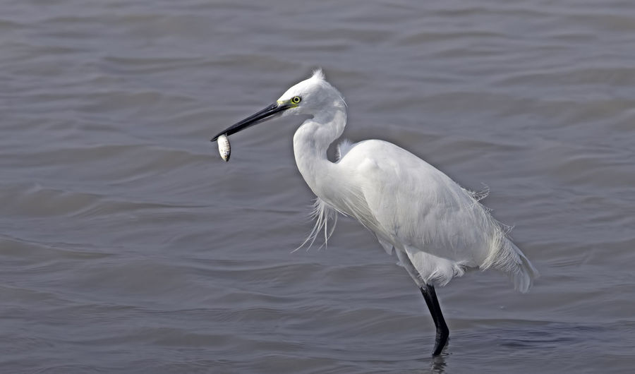 what a rejoice! Animal Themes Animal Wildlife Animals In The Wild Beak Close-up Lake No People One Animal Outdoors