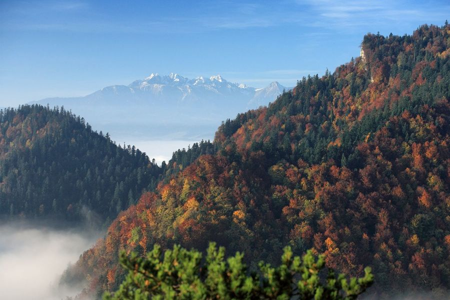 Autumn Beauty In Nature Blue Cloud - Sky Clouds Day Fog Growth High Angle View Idyllic Inversion Majestic Mountain Mountain Range National Park Nature No People Non-urban Scene Outdoors Pieniny Poland Remote Scenics Tatry Tranquility