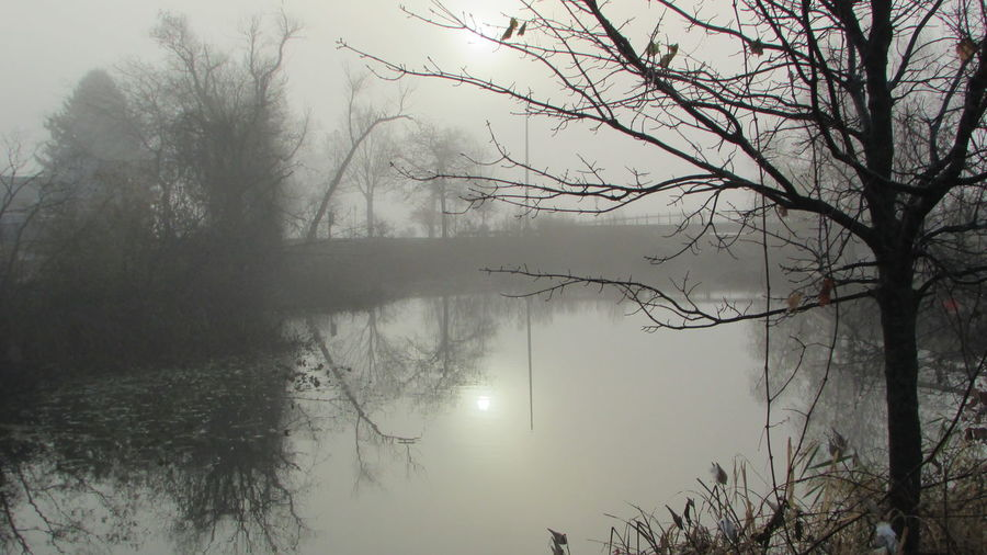 Out Walking Early Morning Clam River Walkway Cool Foggy View Tranquility Beauty In Nature Cadillac Michigan