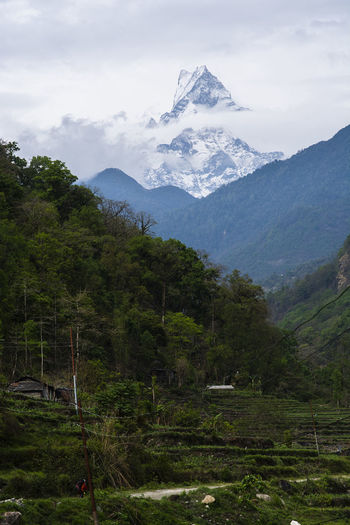 Fishtail Mountain Peak in Nepal Mountain Scenics - Nature Beauty In Nature Sky Plant Landscape Tranquil Scene Tree Tranquility Environment Mountain Range Cloud - Sky Nature Non-urban Scene No People Land Cold Temperature Growth Day Outdoors Snowcapped Mountain Mountain Peak Nepal Fishtail Mountain Himalayas Valley
