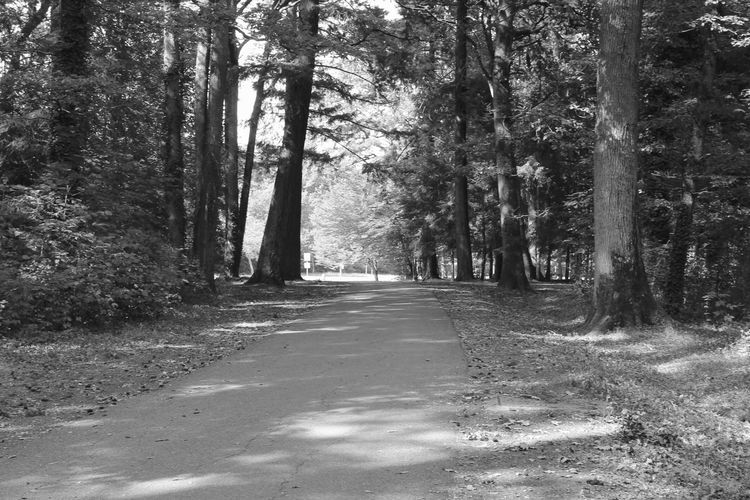 Suivre le chemin... Foret Obscure Chemin Trees Canonphotography Canon Branches Nature Is Beautiful Nature Orléans
