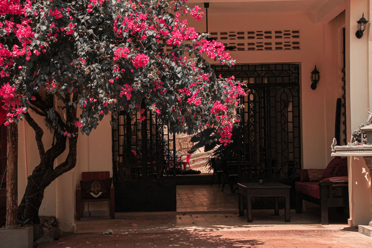 View of flowering plants and trees in building