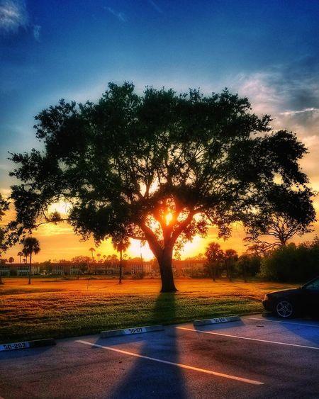 Good morning... ☕🌞 Sunrise EyeEmNewHere EyeEm Best Shots Morning Tree Landscape