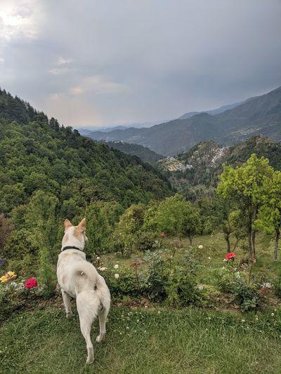 Dog on mountain against sky