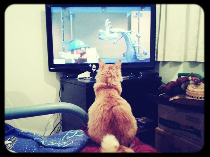 Roy 98. Cat Movie Time Monsters INC