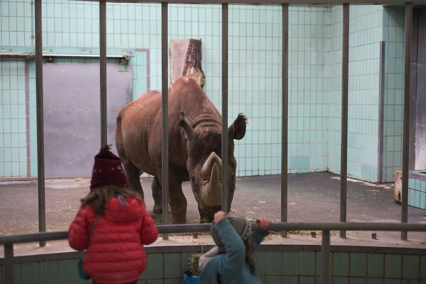A picture from the zoo in Frankfurt. Bright Children Eye Contact Feeding  Hat Wild Animal Zoo Animal Blue Brown Cage Cell Domestic Animals Grey Mammal Mammals Nature People Real People Rear View Rhino Rhinoceros Zoo Animals  Zoo Frankfurt Zoological Garden