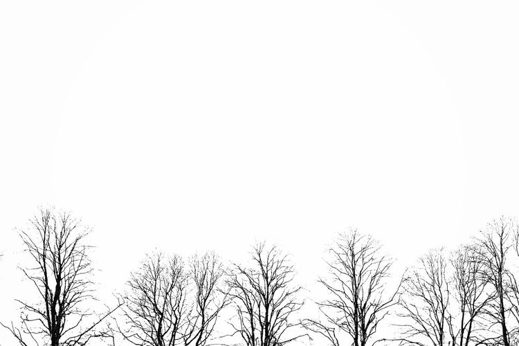 Bare Tree Beauty In Nature Branch Day Low Angle View Nature No People Outdoors Pattern Simple Simplicity Simplicity Is Beauty. Sky Texture Tranquility Tree Treetop Wood
