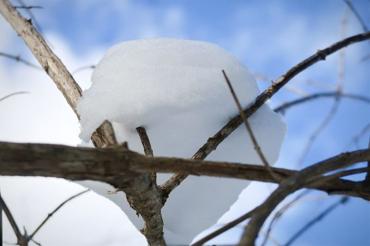 Low angle view of snow on tree against sky