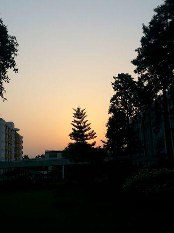 StandingTALL Sunset Sunshine Evening Sky Nature Beauty